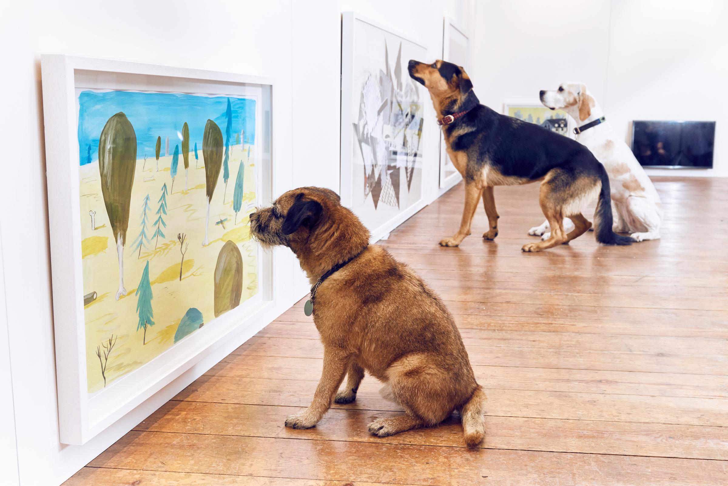 BUCK_Dogs_Exhibition-1.jpg