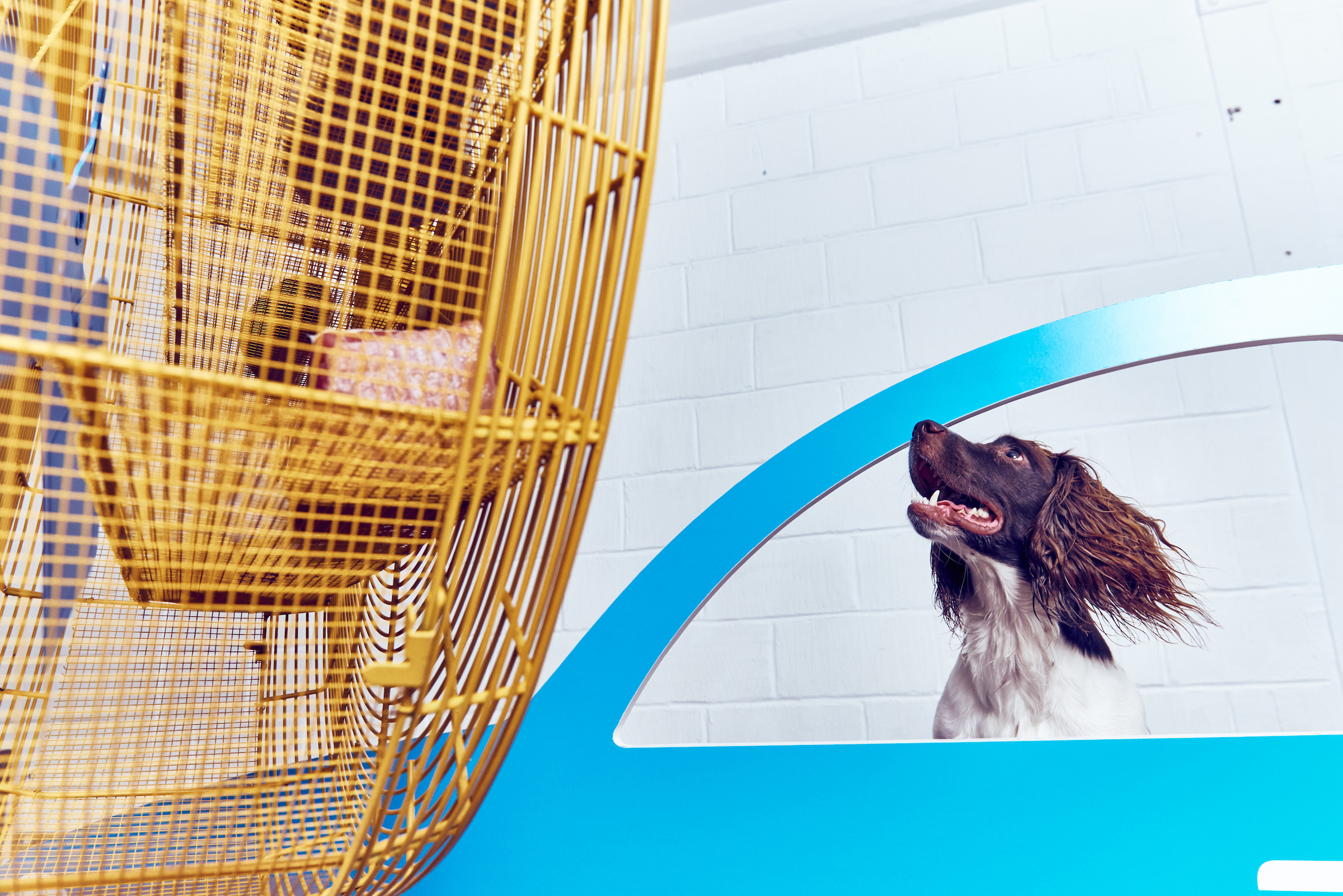 BUCK_Dogs_Exhibition-10.jpg