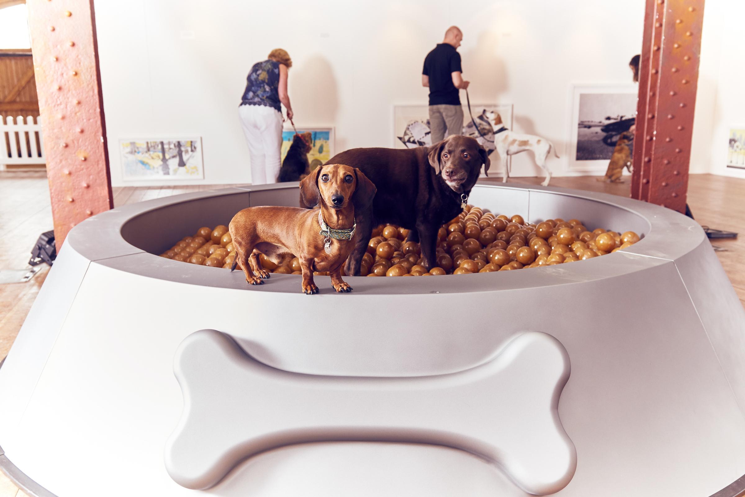 BUCK_Dogs_Exhibition-3.jpg