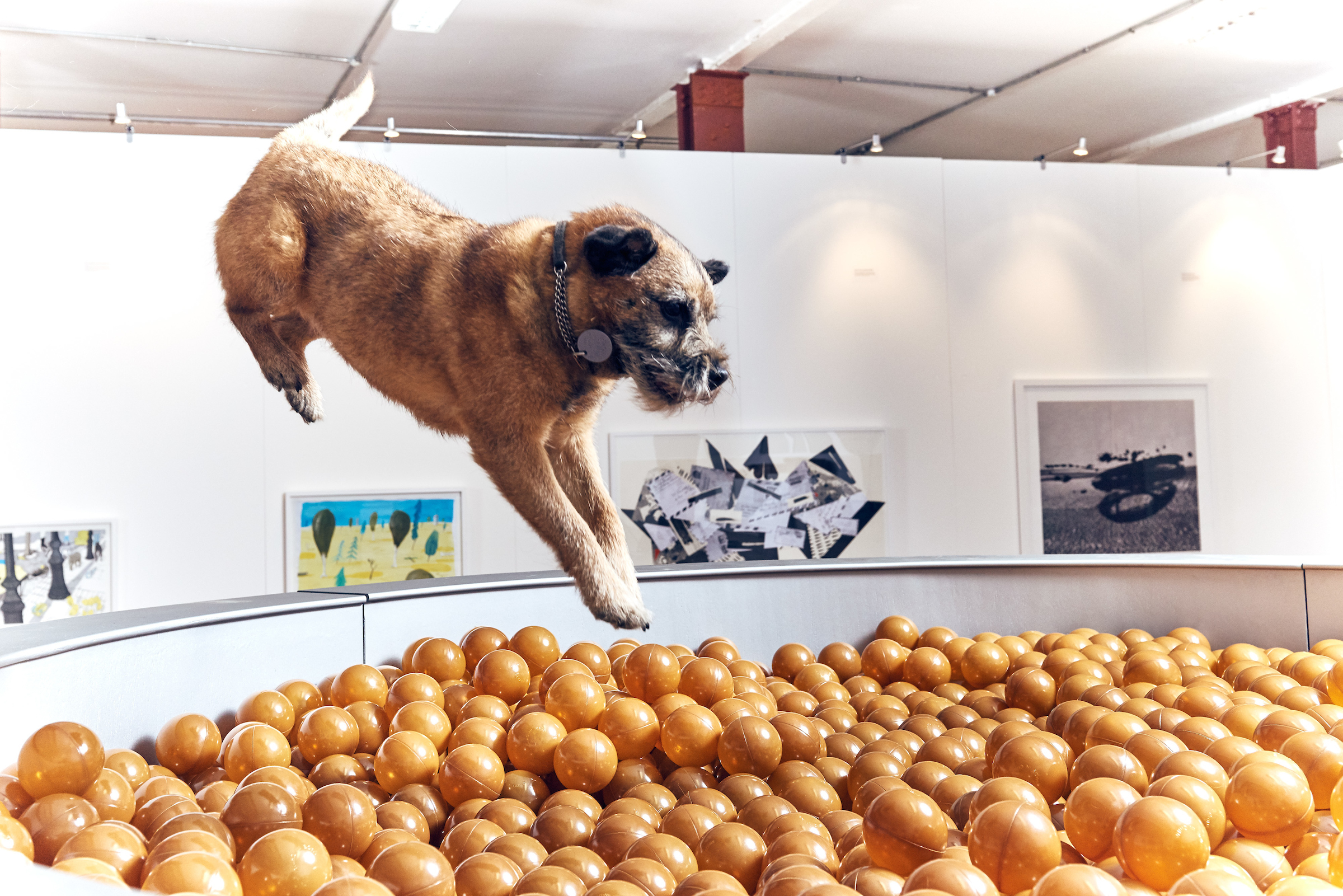 BUCK_Dogs_Exhibition-6.jpg