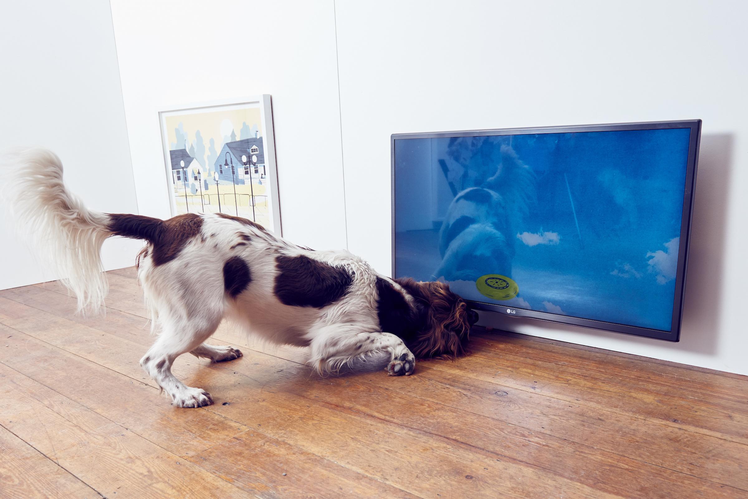 BUCK_Dogs_Exhibition-7.jpg