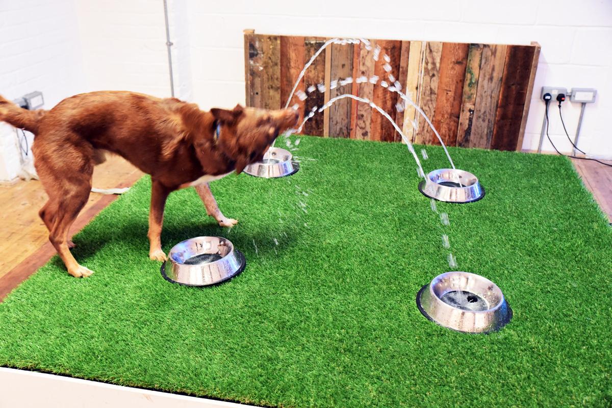 waterdog.jpg